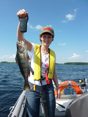 Perch fishing trips on Lake Saimaa from the Cottage Jokiniemi